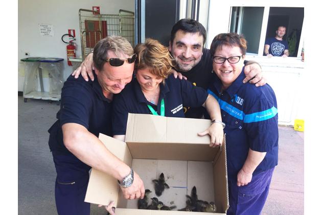 Visita a sorpresa in pronto soccorso… e il 118 salva tre anatroccoli
