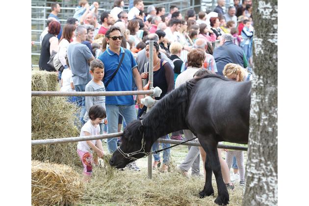 Cosa c'è alla Fiera agricola del Santerno (16-18 giugno): il programma sul tuo cellulare con AppU