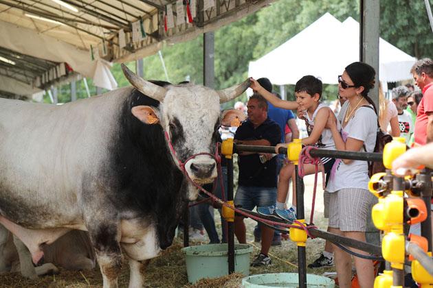 Fiera Agricola del Santerno da record, divertimento per tutti, soprattutto per i bambini