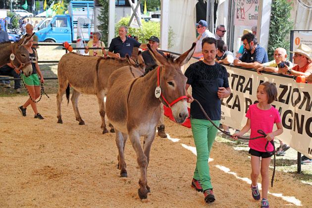 Oltre 40 mila visitatori alla Fiera Agricola del Santerno, soddisfatti gli organizzatori