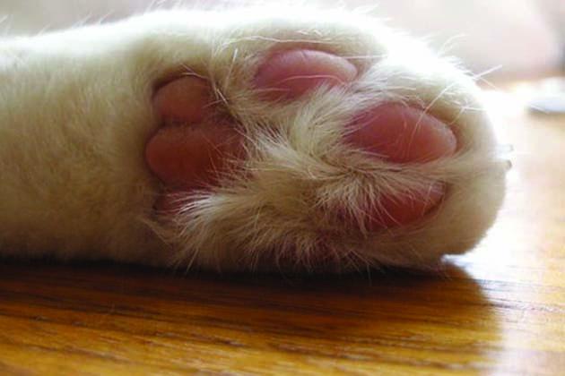 """Il gattile di Medicina festeggia i vent'anni con gli """"A-Mici"""""""