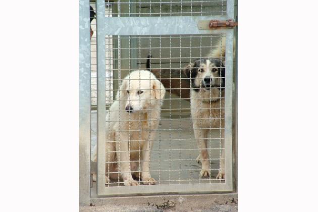 A Castello di nuovo attivo il servizio per il recupero dei cani randagi, disponibile 24 ore su 24