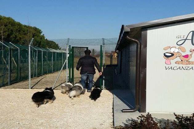Webcam per vedere i cani nei box del Zabina