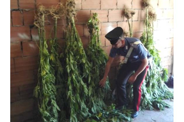 Sequestrati 22 kg di marijuana