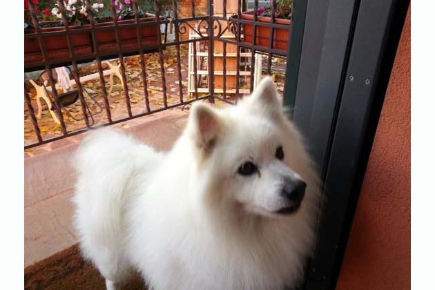 Cani avvelenati, uccisi con lumachicida