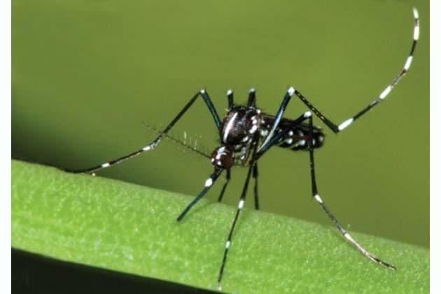 """Virus Zika, """"Situazione sotto controllo"""""""