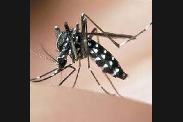 Zanzara tigre, larvicidi a prezzi scontati in farmacia