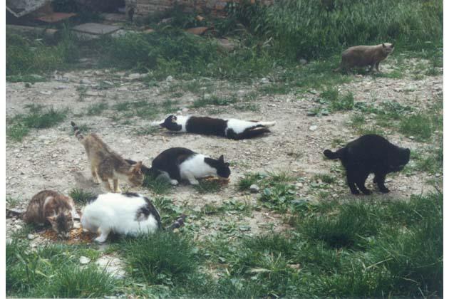 "Vandali all'oasi felina ""Felix"""