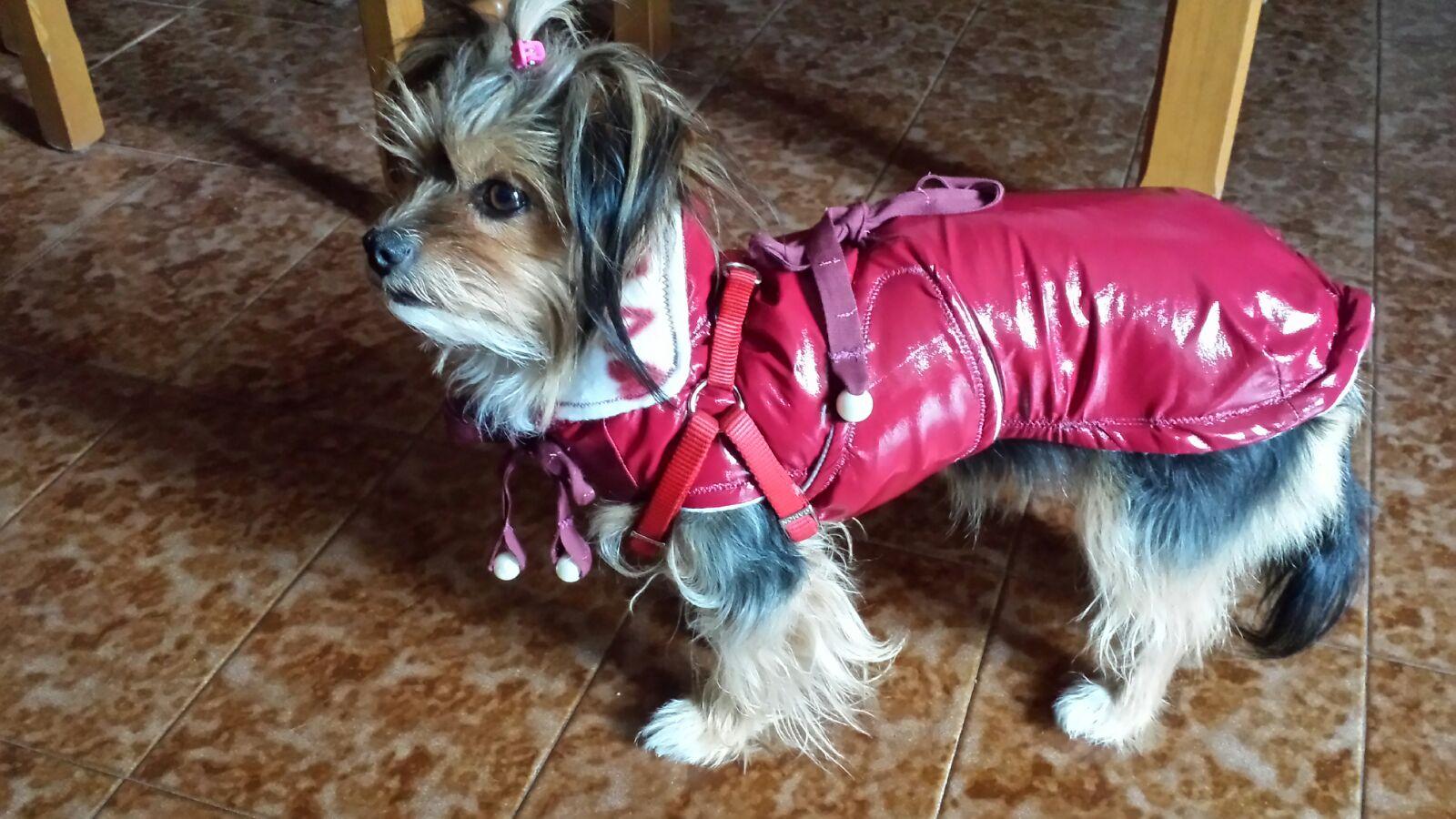 """Le creazioni della """"sarta per cani"""" sfilano nel Borgo"""