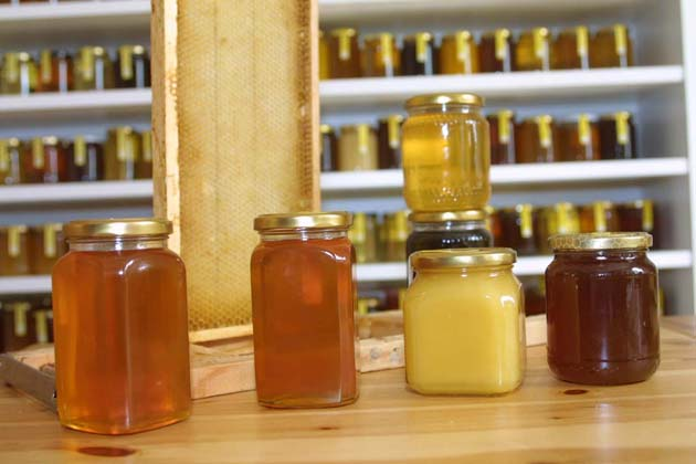 Crolla la produzione di miele, apicoltori in difficoltà