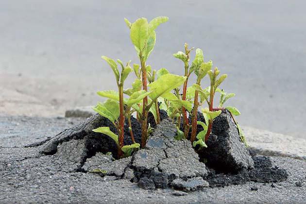 Distribuzione gratuita di piante per la Festa dell'albero
