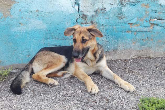 Cinque cagnolini dall'Abruzzo al canile per essere adottati