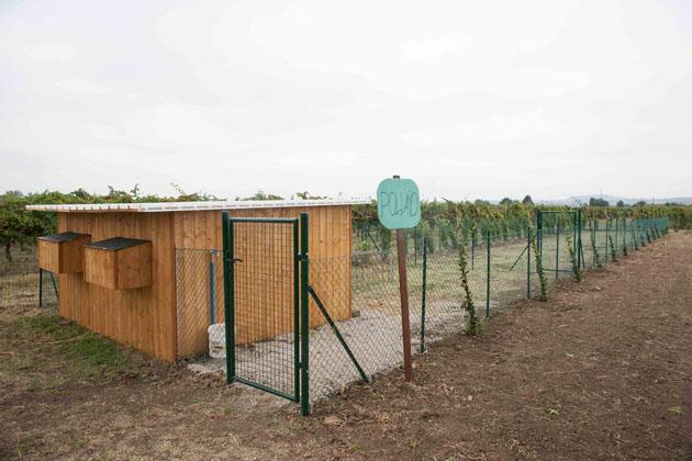 Promozione a La Tartaruga: se affitti un orto in omaggio una gallina