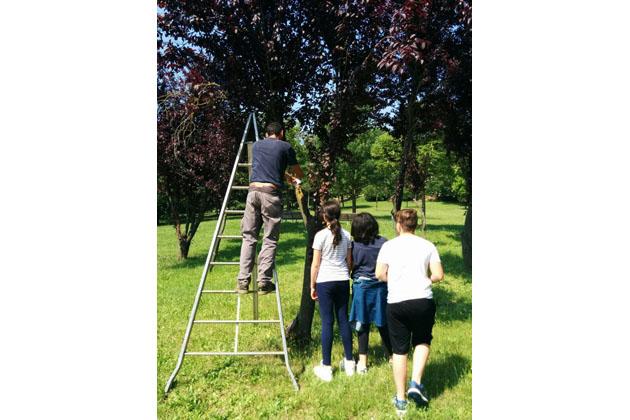 Gli alberi hanno il QRcode e la carta di identità grazie ai ragazzi della scuola media Pizzigotti