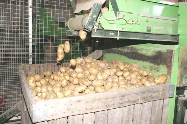Agripat fissa la soglia minima del prezzo della patata bolognese
