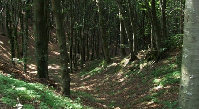 Il festival della scienza di Imola si apre nella natura del Bosco della Frattona
