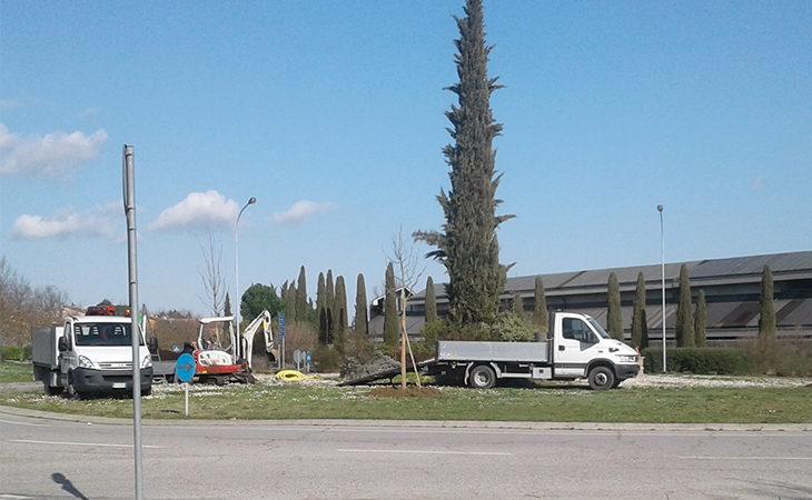 Piantati quattro nuovi aceri nella rotonda di via Viara a Castello