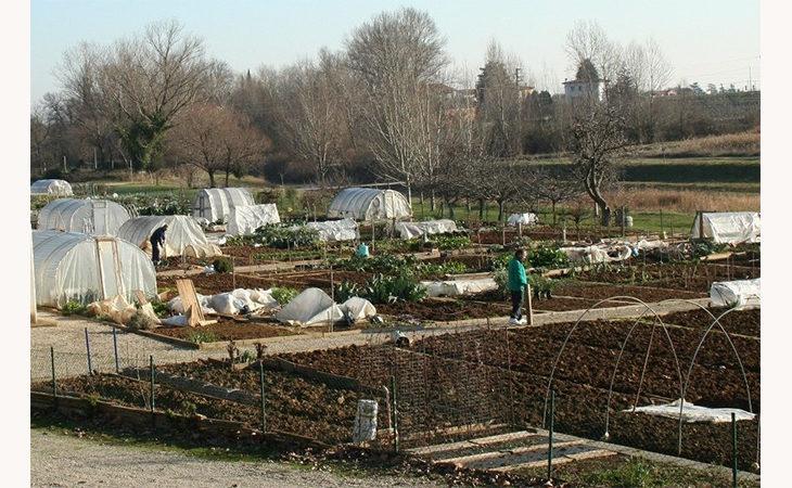 Coltivare e zappare l'orto al posto della sospensione. Il progetto per gli studenti dello Scappi