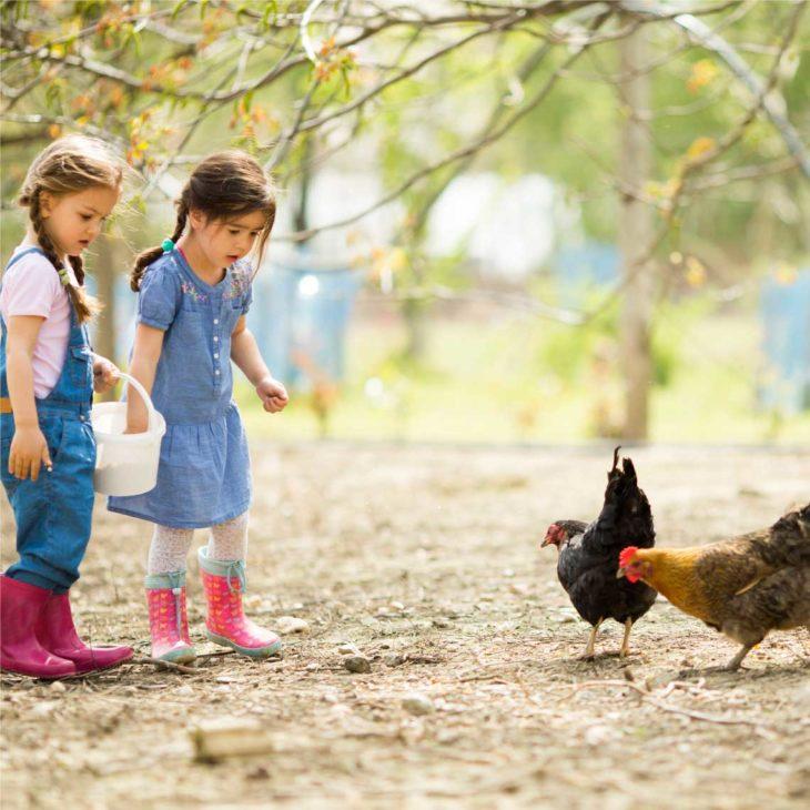 Fattorie Aperte con tante attività per i bambini