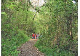 «Voci e natura nella notte», escursione gratuita al Bosco della Frattona tra suoni, luci e animali