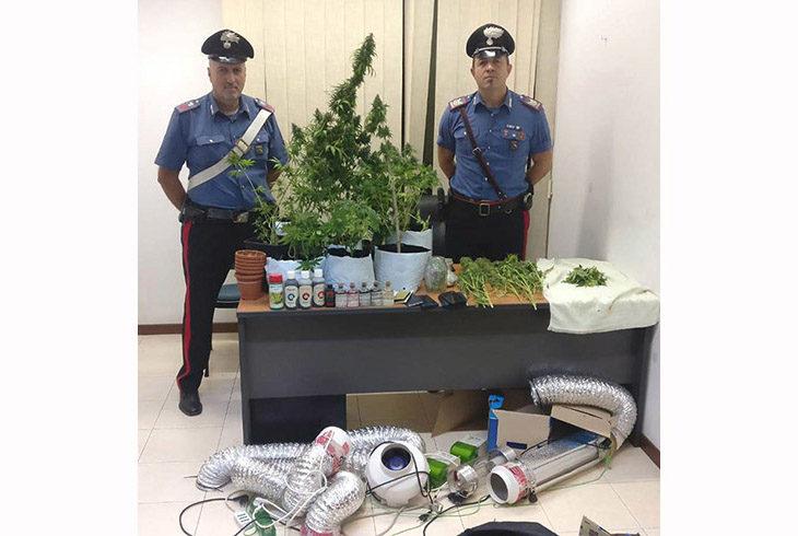 Una piantagione di marijuana scoperta nell'appartamento di due cugini a Ozzano