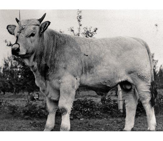 Un vitellone, figlio di