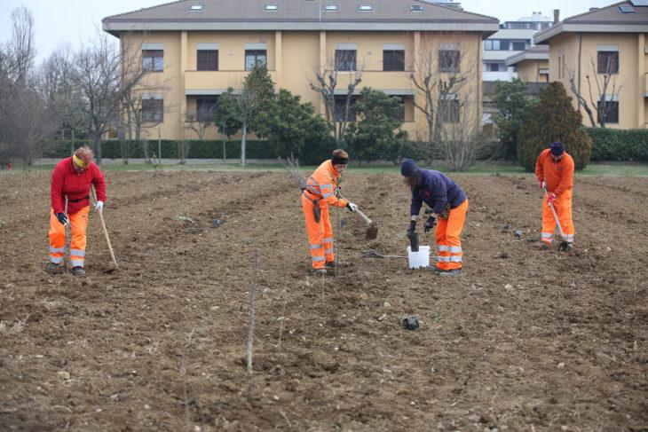 """A Imola nasce il """"Bosco in città' con 5000 nuove piante"""
