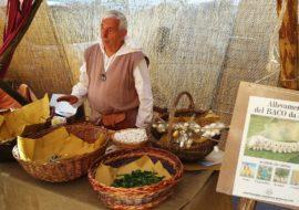 """A Medicina l""""allevamento del baco da seta, fra hobby e tradizione"""