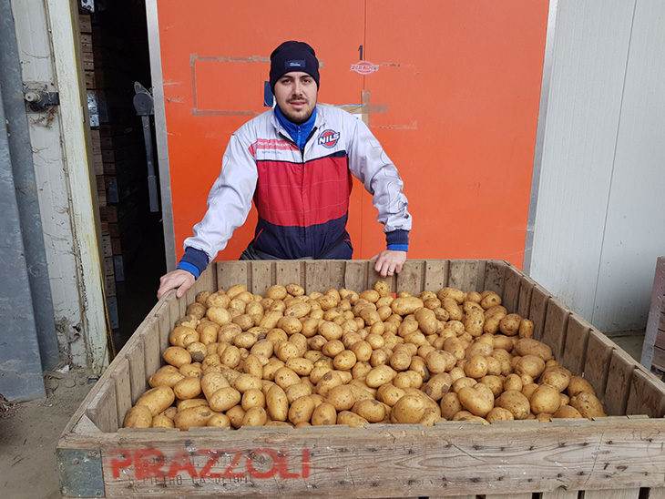 Agricoltura, fissato il prezzo delle patate. I commenti dei produttori: «Troppo basso e non copre i costi»