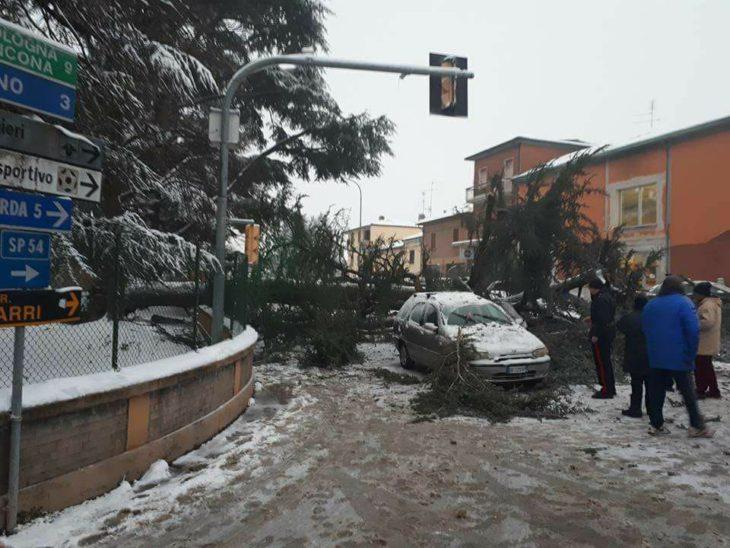 Maltempo, le abbondanti nevicate hanno provocato la caduta di un cedro a Mordano
