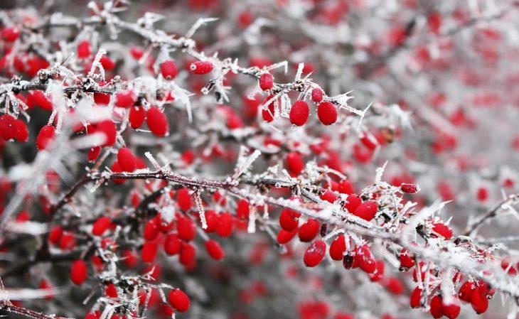 Maltempo, neve e gelo mettono a rischio l'agricoltura. Bruciati dal freddo gli albicocchi fioriti