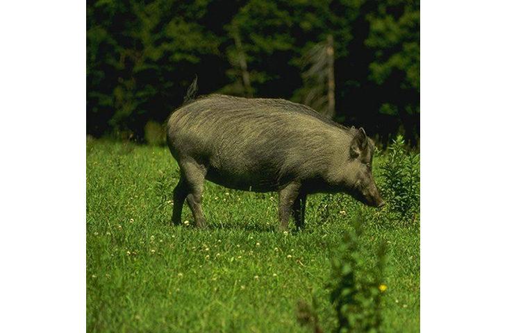 """Fauna selvatica """"non tutelata', risarcimenti e finanziamenti per agricoltori e allevatori"""