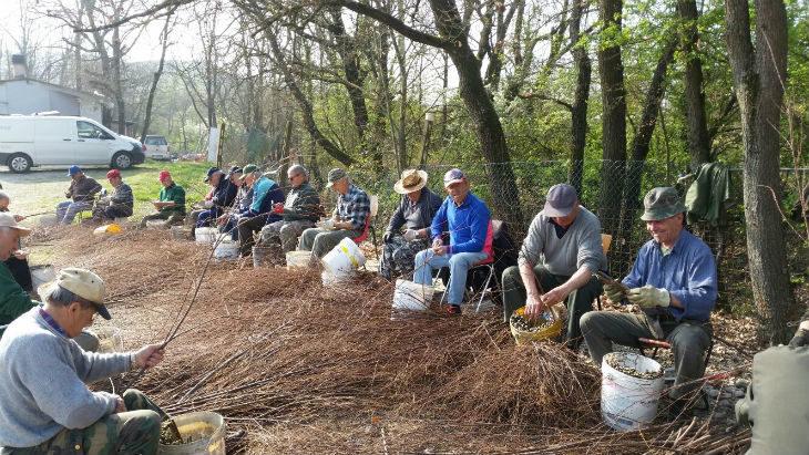 """Salviamo la montagna' piantando le tamerici, i volontari cominciano con le talee"