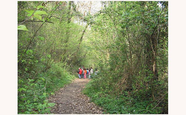 Escursione nel Bosco della Frattona tra rane, rospi e tritoni
