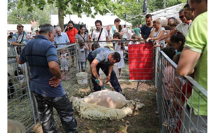 Fiera Agricola del Santerno, animali e agricoltura per tre giorni protagonisti al Sante Zennaro