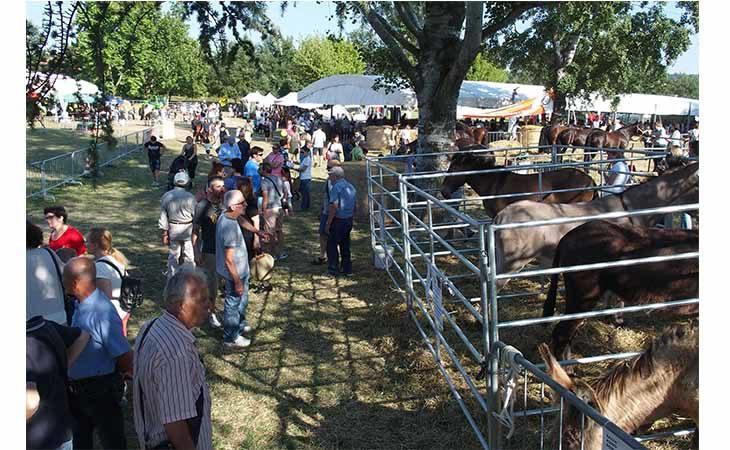 Fiera agricola del Santerno, grande successo di pubblico per l'edizione 2018. IL VIDEO