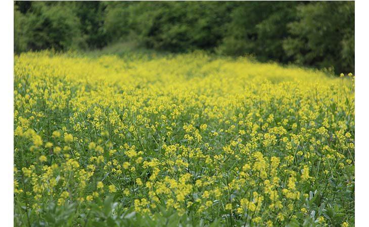«Sei, otto, cento, mille zampe», escursione gratuita alla ricerca di insetti al Bosco della Frattona
