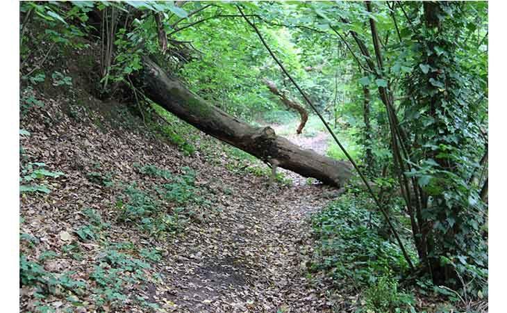 «Voci e natura nella notte», escursione gratuita al Bosco della Frattona