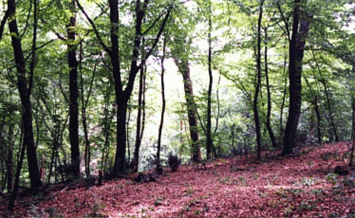 Ambiente, 2,4 milioni di euro dalla Regione per interventi a difesa dei boschi contro malattie, incendi e calamità naturali