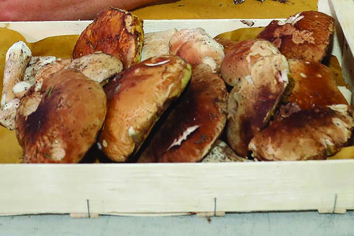 Due weekend al gusto del porcino con la sagra a Castel del Rio