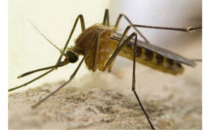 Virus West Nile, trattamenti preventivi straordinari anti-zanzare a Castello