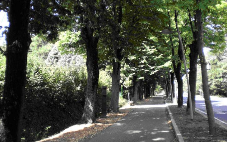 Verde pubblico, Comune e Area Blu fanno il punto sugli interventi fatti e da fare nei prossimi mesi