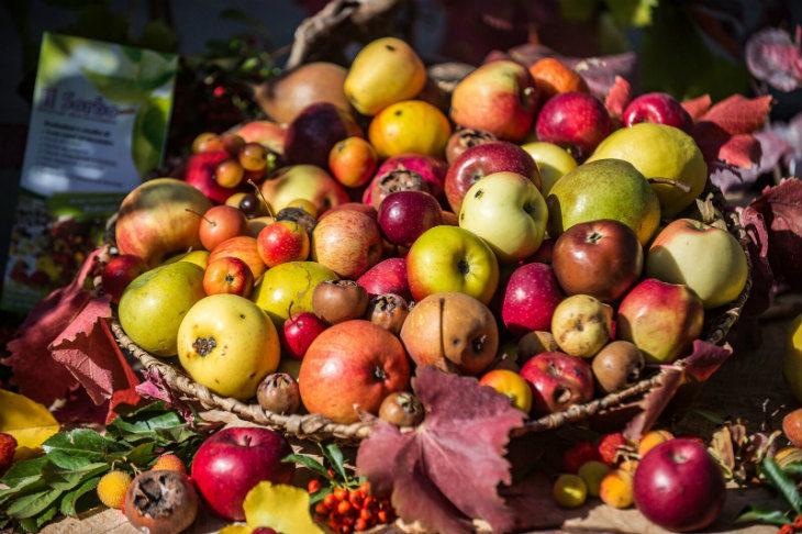 I Frutti dimenticati di Casola Valsenio arrivano anche a Imola: torna il concorso per ristoranti abbinato alla festa di ottobre