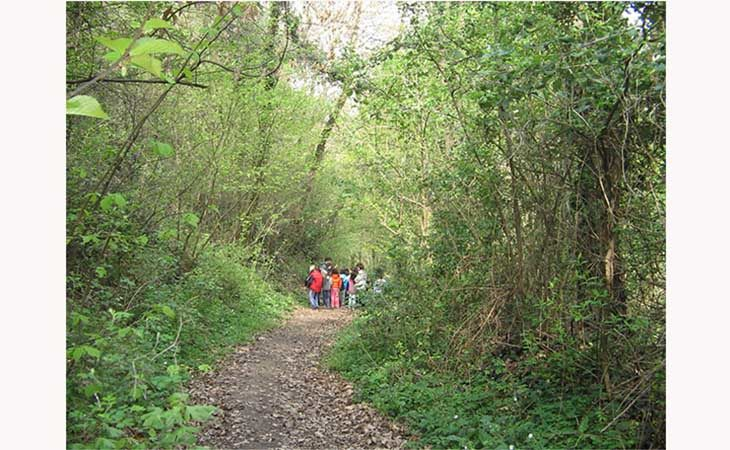 Passeggiata gratuita nel Bosco della Frattona alla scoperta dei funghi