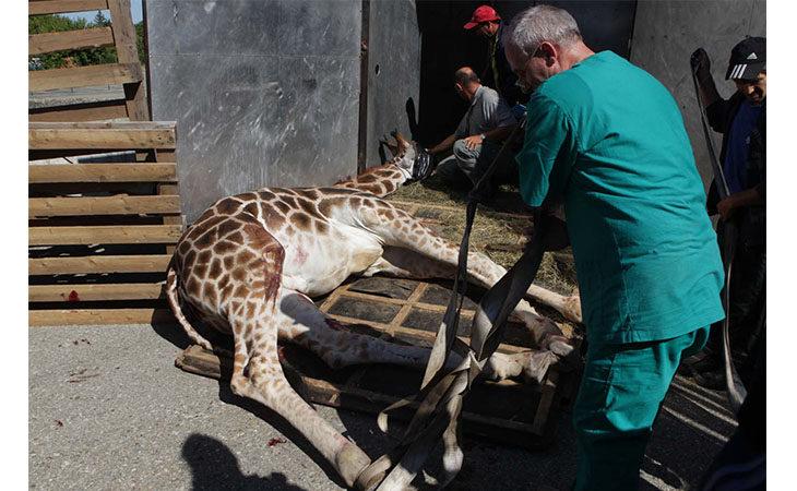 Deroga al Regolamento, a Imola via libera al circo con tigri ed animali esotici