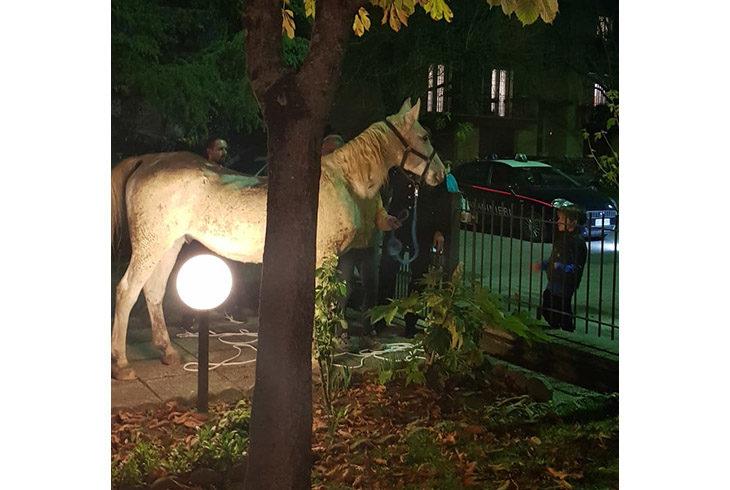 Un cavallo da solo in giro per la città, serata a sorpresa per i residenti di via Foscolo a Castel San Pietro