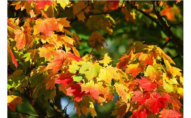 Passeggiata al Bosco della Frattona fra… «tutti i colori dell'autunno»