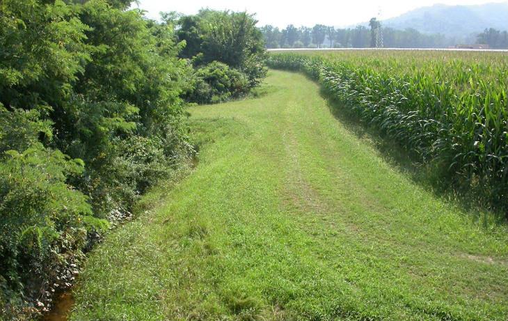 Dieci milioni dalla Regione su cinque bandi per l'agricoltura a salvaguardia del territorio e dell'ambiente