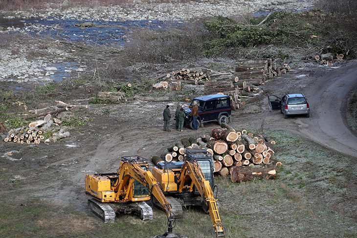 Scattati i controlli dopo le segnalazioni sul taglio degli alberi lungo l'argine del Santerno a Castel del Rio