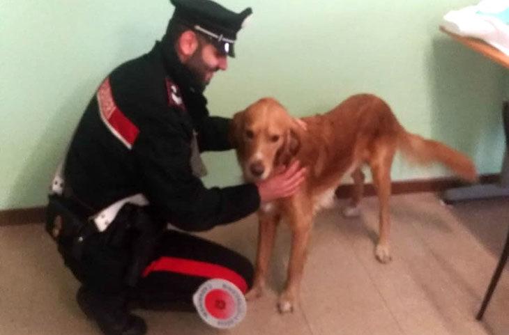 Ubriaca, picchia il cane con calci e pugni, denunciata una donna di 48 anni di Imola